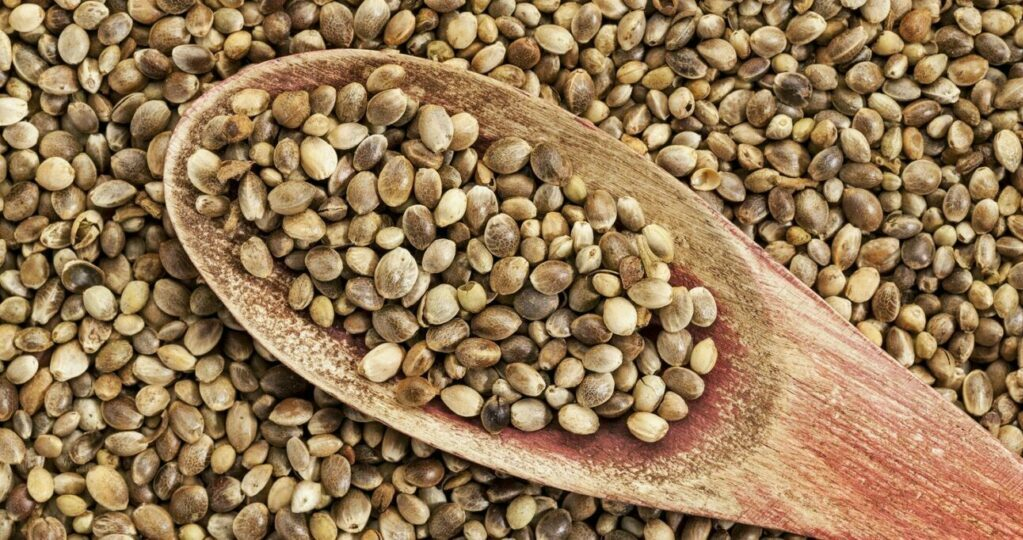 Hemp seeds provide a highly nutritious source of protein and essential omega fatty acids